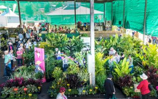 crowds shopping plants at qge