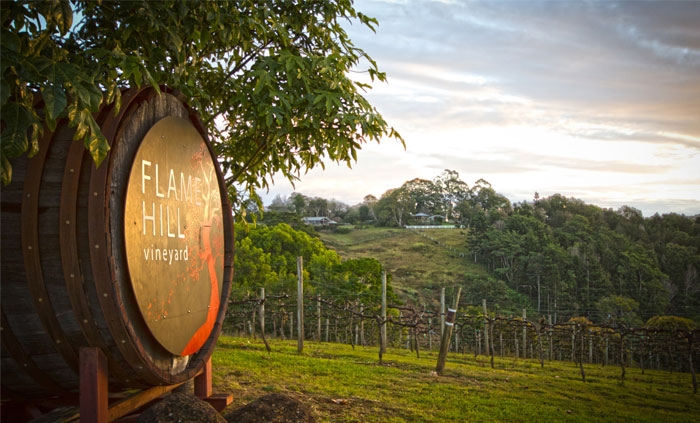 flame tree vineyard on the sunshine coast