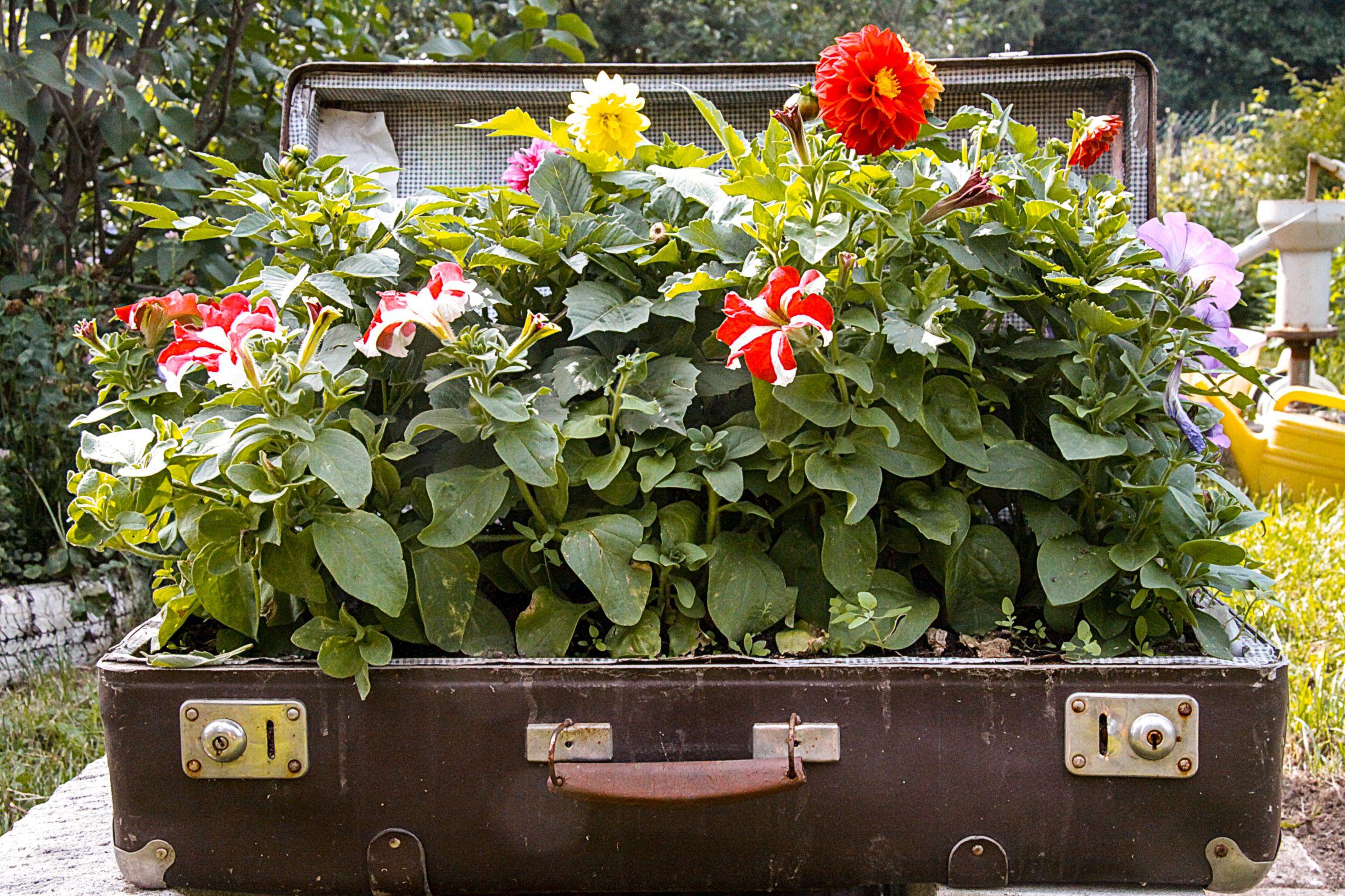 Garden Suitcase Planter