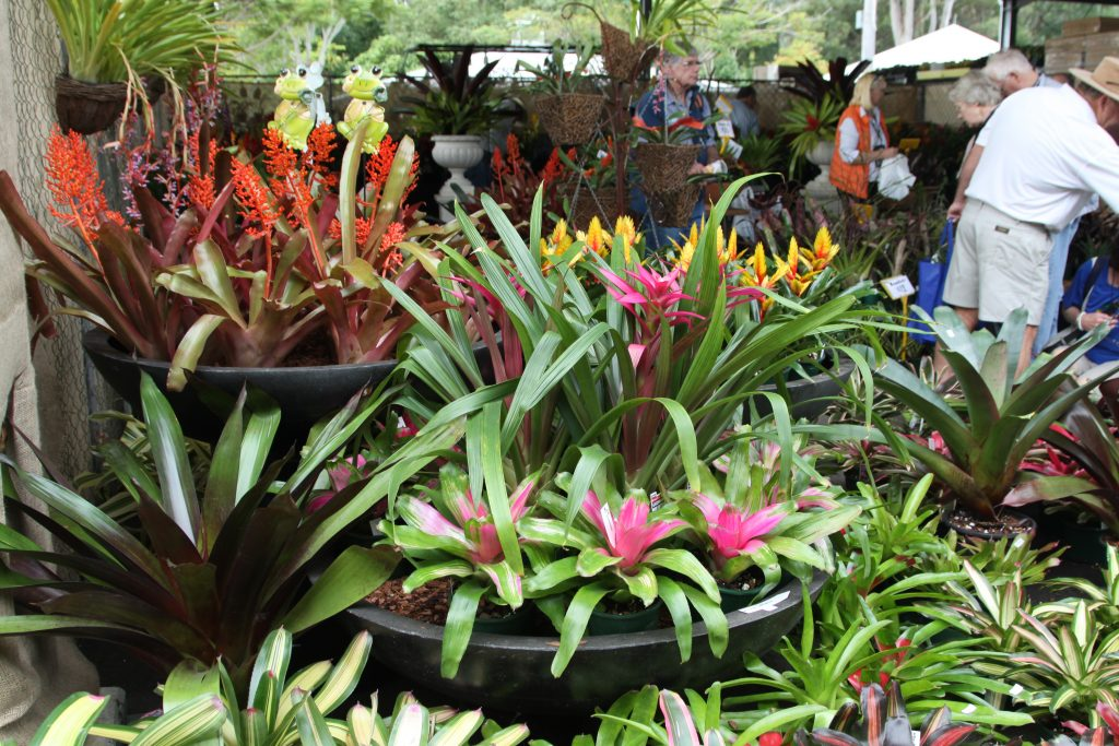 Plants at Queensland Garden Expo