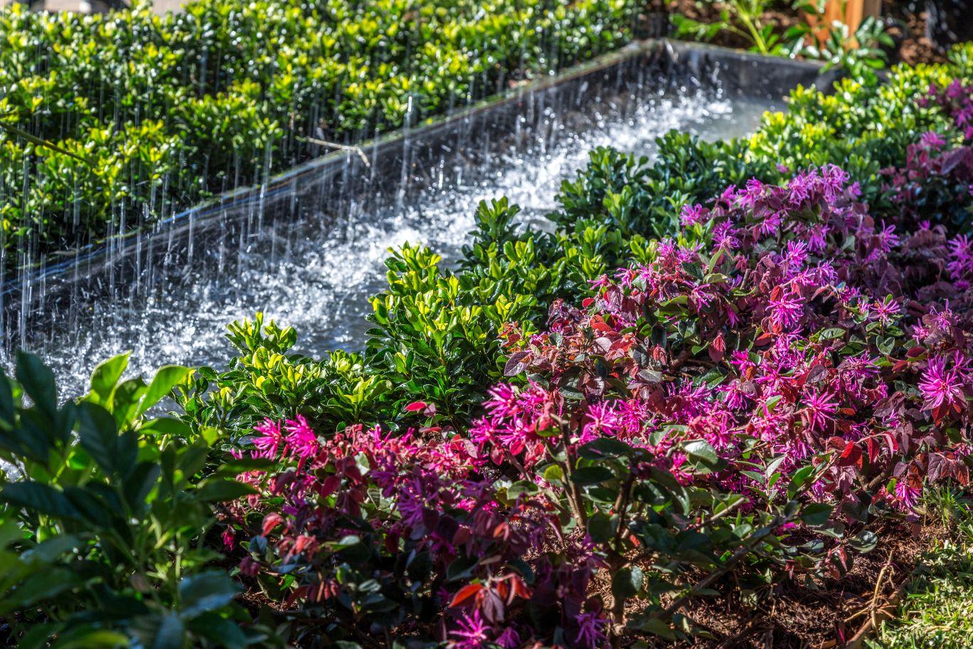 Odyssey Landscapes garden display at the 2019 Queensland Garden Expo