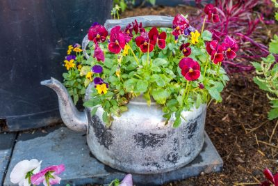 Teapot filled with flowers at the 2019 Queensland Garden Expo