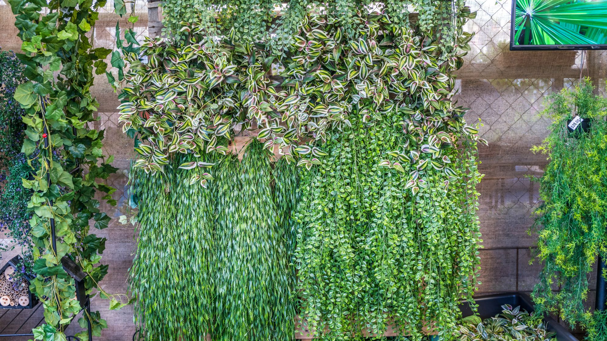 Vertical garden at the 2019 Queensland Garden Expo